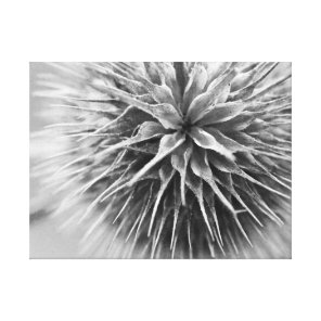 Black and white photography floral canvas print