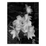 Black And White Photography Flowers Poster
