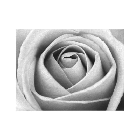 Black and White Photography Rose Minimal Wall Art