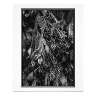 Black and White Picture of Seaweed. Flyers