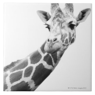 Black and white portrait of a giraffe tile