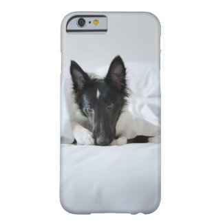 Black and white puppy in  bed with bone barely there iPhone 6 case