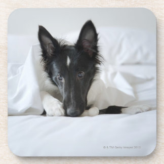 Black and white puppy in  bed with bone drink coasters