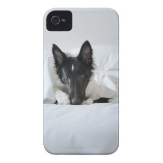 Black and white puppy in  bed with bone iPhone 4 Case-Mate cases