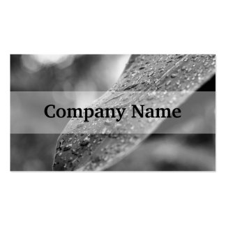 Black and White Raindrops On A Leaf Double-Sided Standard Business Cards (Pack Of 100)