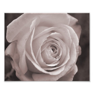 Black and white rose 10x8 photo wall art