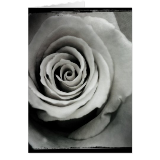 Black and White Rose Blank Greeting Card