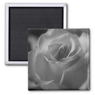Black and White Rose Magnet