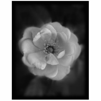 Black and White Rose. Photo Sculpture Magnet