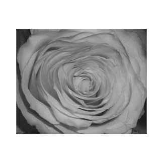 Black and White Rose Photograph Stretched Canvas Print
