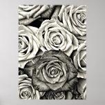 Black and White Roses Poster