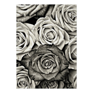 Black and White Roses Posters