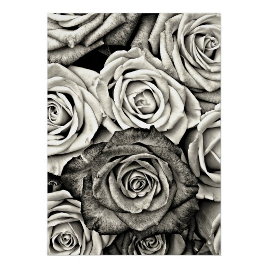 Black and White Roses Poster