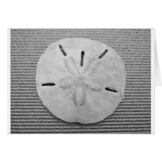 Black and White Sand Dollar Card