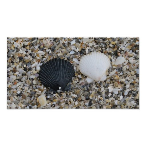 Black and white sea shells poster