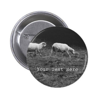 Black and White Sheep In A Pasture Photo 6 Cm Round Badge