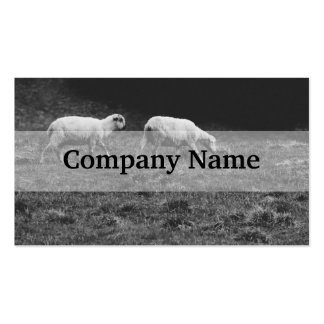 Black and White Sheep In A Pasture Photo Business Cards