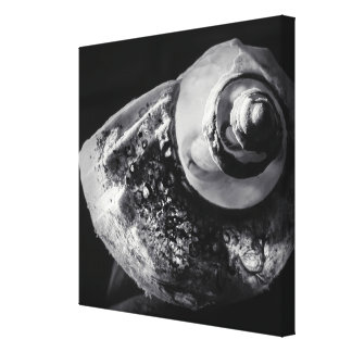 Black and White Shell Wrapped Canvas Stretched Canvas Print