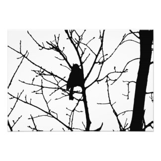 Black and White Silhouette of chickadee in a tree Photo