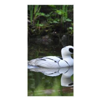 Black and White Smew or Sea Diving Duck Waterfowl Personalized Photo Card