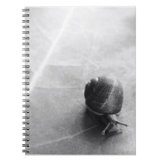 Black and White Snail Notebook