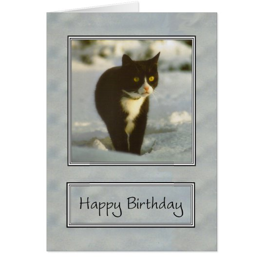black and white snow kitten happy birthday card