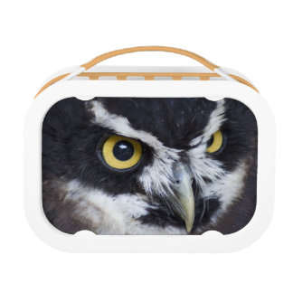 Black and White Specacled Owl Lunch Box