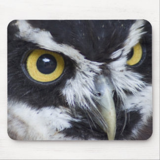 Black and White Specacled Owl Mouse Pads