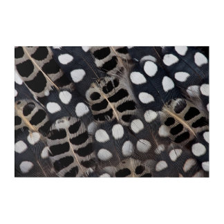 Black And White Spotted Feathers Acrylic Print