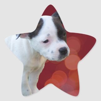 Black And White staffordshire Bull Terrier Puppy, Star Sticker