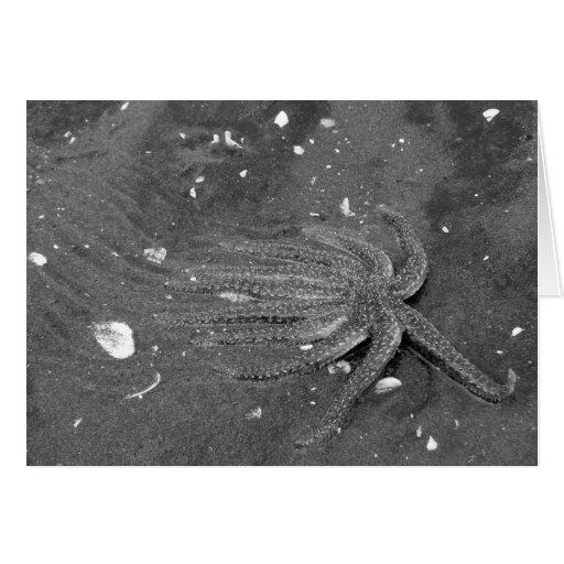 Black and White Starfish Escape Card