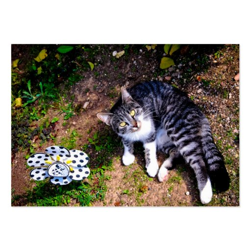 Black and white striped cat business cards