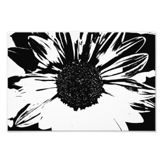 Black and White Sunflower Print Photo