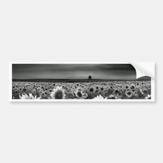 Black and White Sunflowers Bumper Sticker