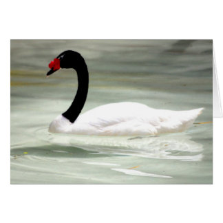 Black and White Swan Card