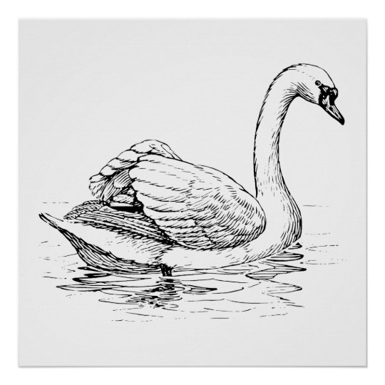 Black and White Swan Poster