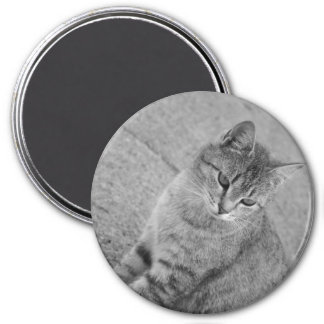 Black And White Tabby Cat Photograph Magnet