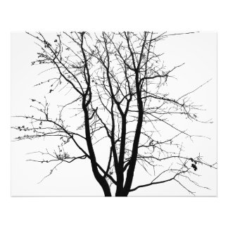 Black and white, tree and sky photographic print