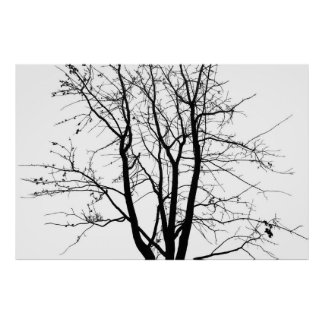 Black and white, tree and sky poster