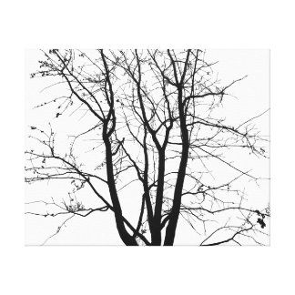 Black and white, tree and sky stretched canvas prints