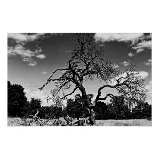 Black and white tree, poster