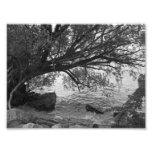 Black and White Tree Silhouette Photographic Print