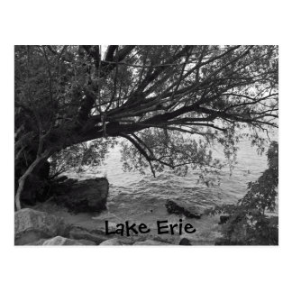 Black and White Tree Silhouette Postcard