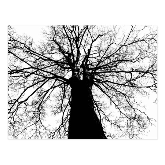 Black and White Tree Silhouette - Postcard