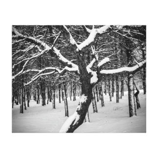 Black and white, trees and snow canvas prints