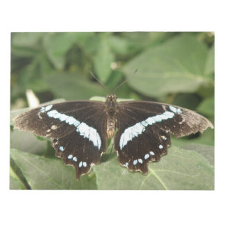 Black and White Tropical Butterfly Notepad