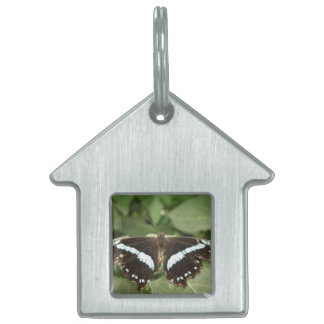 Black and White Tropical Butterfly Pet Tag