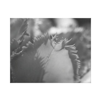 Black And White Canvas Prints Black And White Wrapped