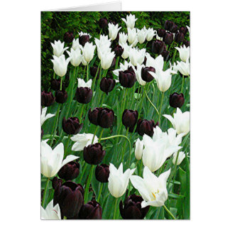 """""""Black and White Tulips"""" notecard Note Card"""