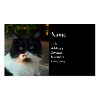 BLACK AND WHITE TURKISH CAT PIERO BUSINESS CARDS